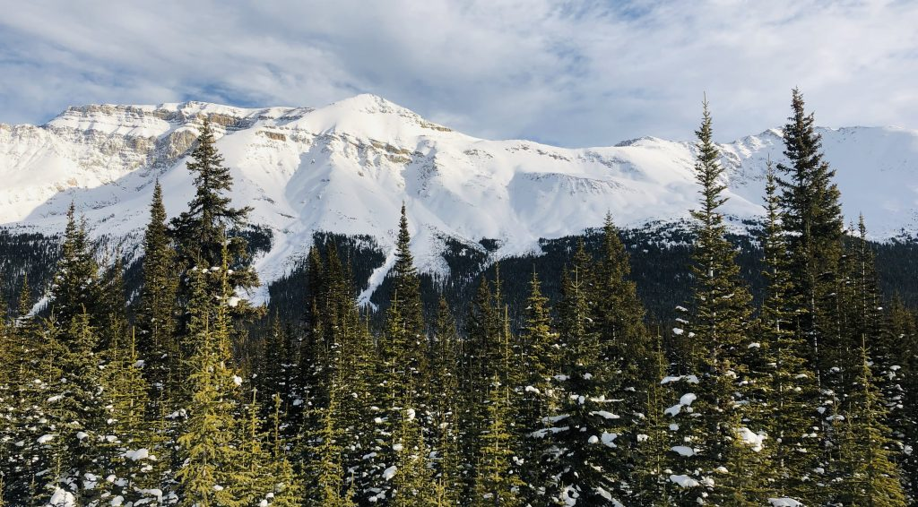 Snow capped mountains and pine trees along the Icefield Parkway in Banff National Park