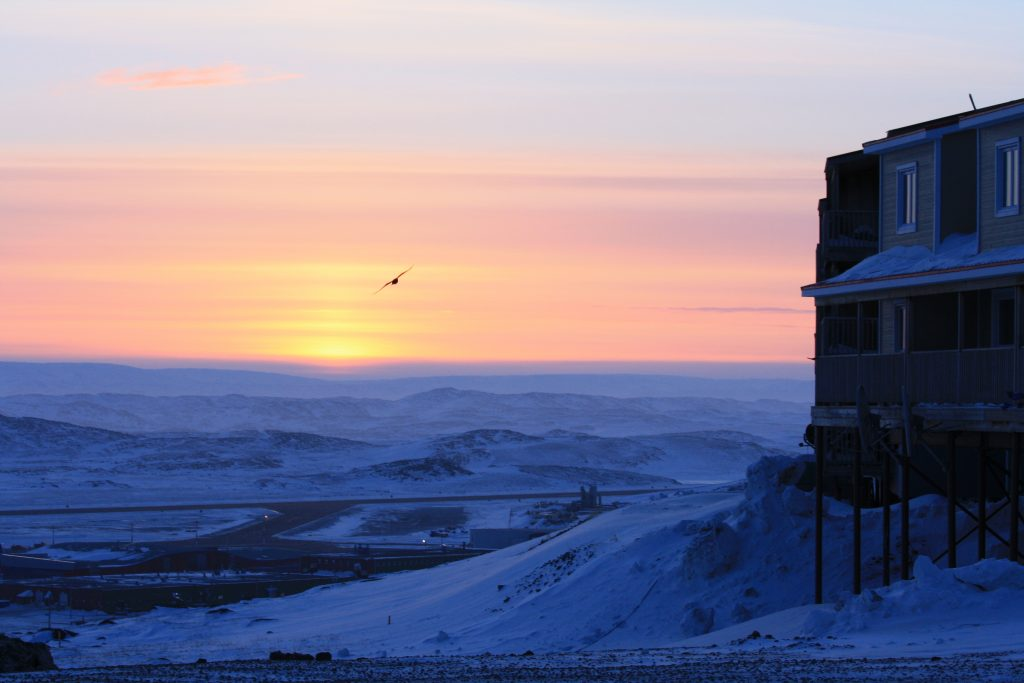 Bird flying before sunset over tundra in Iqaluit, Nunavut