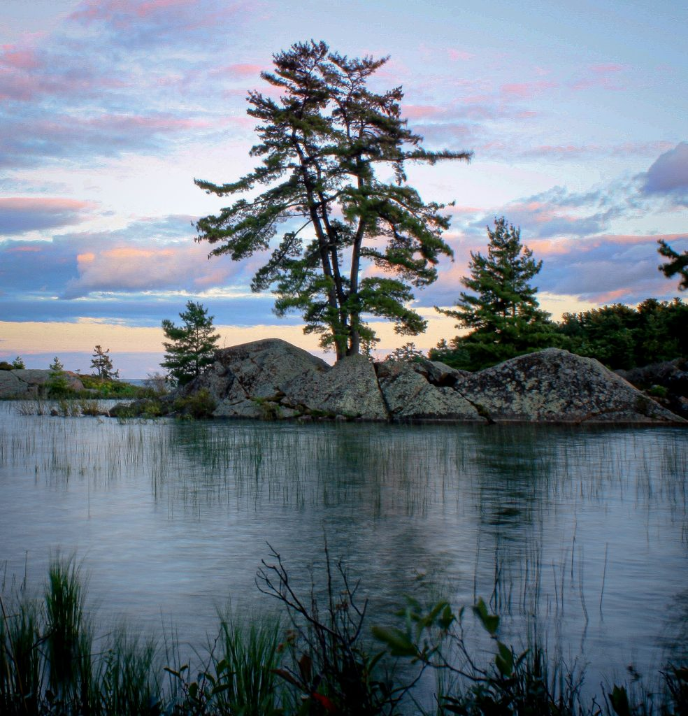 Killarney Provincial Park - Pine tree on Canadian Shield rocks in front of a sunset