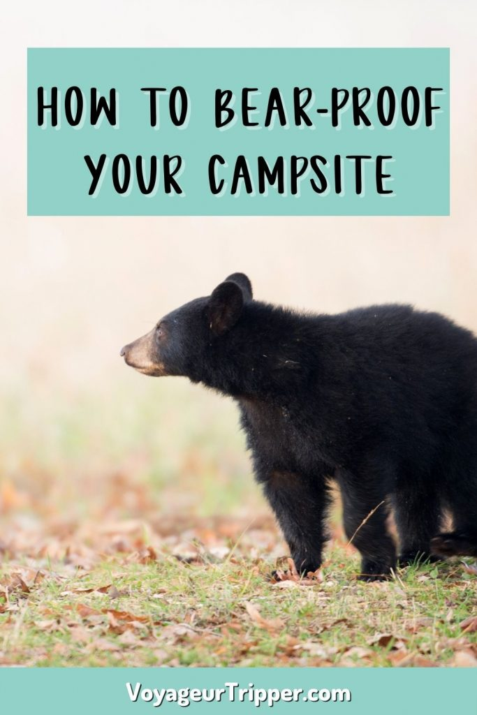 How to bear proof your campsite in the backcountry