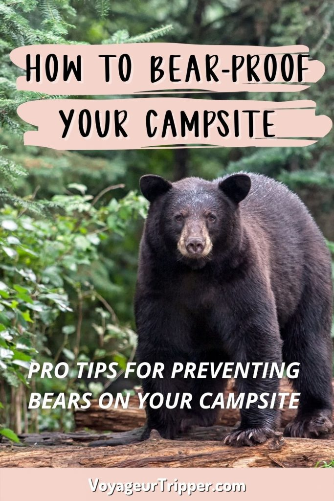 How to be safe with bears in Algonquin Park - Pin